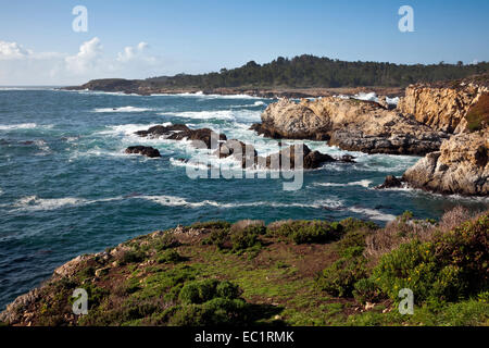 CA02463-00...CALIFORNIA - View north along the coastline from the Bird Island Trailhead at Point Lobos State Reserve. - Stock Photo
