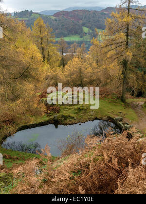 Autumn colour with small tarn and Grasmere beyond, Lake District, Cumbria, England, UK - Stock Photo