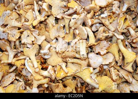 Fungi on the fruit market of Bolzano. - Stock Photo
