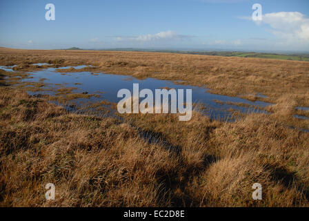 Autumn view of blanket bog with moss and grasses, Dartmoor National Park, Devon, England - Stock Photo