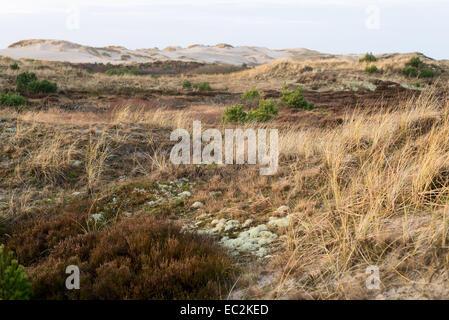Dune landscape in Skagen, Denmark with vegetation and hills - Stock Photo