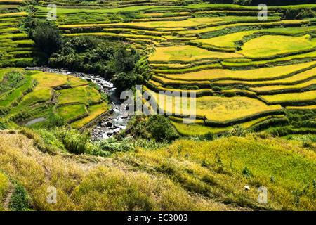 Ifugao rice terraces - Stock Photo