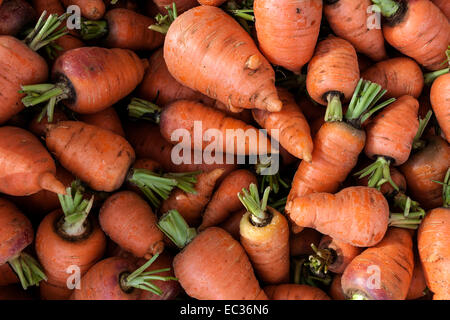 Carrots (Daucus carota) - Stock Photo