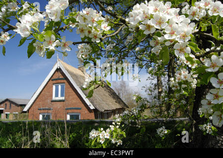 Thatched Roof House at Elbe Dike, Spadenland, Hamburg, Germany - Stock Photo