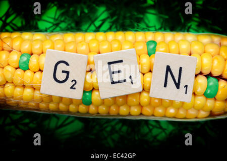 Corncob and letter cubes, genetically modified corn - Stock Photo