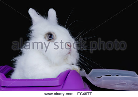 White rabbit looks out from a pink box. - Stock Photo