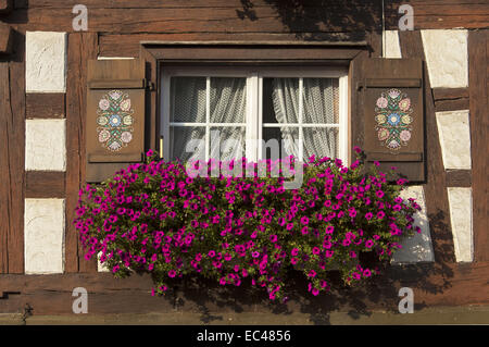 Flower box brimming with petunia in a window of half-timbered house, Baden-Wuerttemberg, - Stock Photo