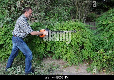 hedge cutting - Stock Photo