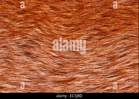 Red fox fur pelt texture cloth abstract - Stock Photo