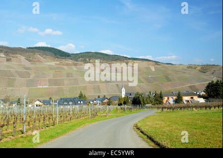 Lösnich on the Moselle river in the spring - Stock Photo