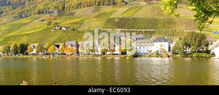 old Piesport on the Moselle panorama in autumn - Stock Photo