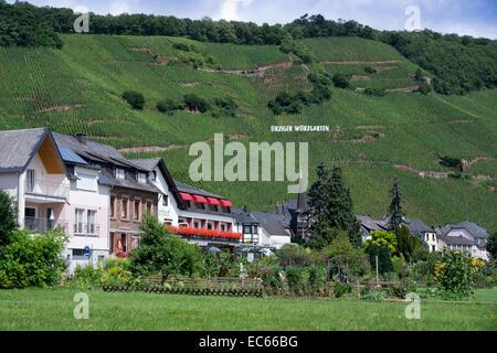 Uerzig, Middle Moselle, district Bernkastel Wittlich, Rhineland Palatinate, Germany, Europe - Stock Photo