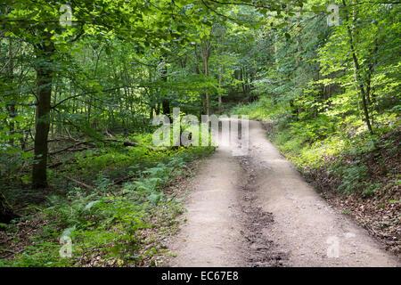 Forest track near Burg Eltz castle, Muenstermaifeld, district Mayen Koblenz, Rhineland Palatinate, Germany, Europe - Stock Photo