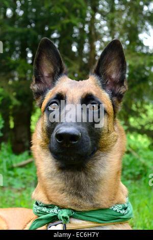 watchdog - Stock Photo