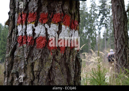 Trail markings on an old tree - Stock Photo