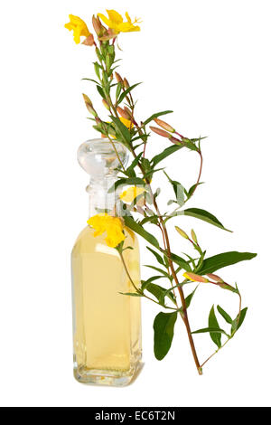 Bottle of oil with fresh evening primrose - Stock Photo