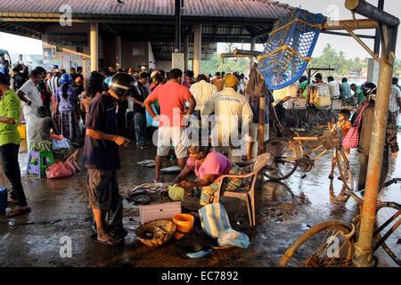 Fresh fish market in Negombo, Sri Lanka - Stock Photo