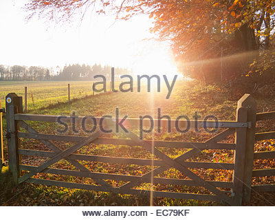 Autumn scene with country gate - Stock Photo