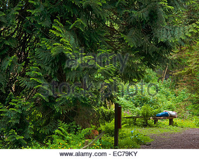 Woman lying on a bench in a forest - Stock Photo