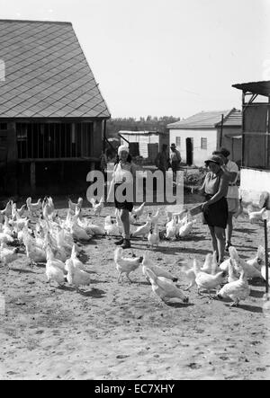 Zionist colonies on Sharon. Borochov, Girls farm, feeding poultry - Stock Photo
