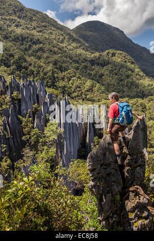 Hiker at the Pinnacles, karst landscape, Gunung Mulu national park, Sarawak, Malaysia - Stock Photo