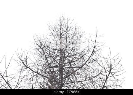 leafless tree isolated on white background - Stock Photo
