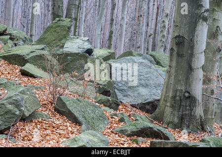 Mossy boulders in the beech tree forest growing on Sleza Mount Lower Silesia - Stock Photo