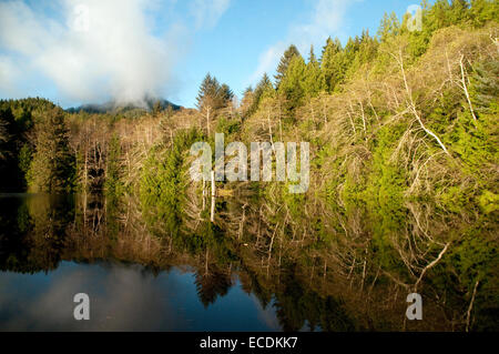 A forest of alders and conifers reflected in the waters of Beales Lagoon, in British Columbia's Great Bear Rainforest, - Stock Photo