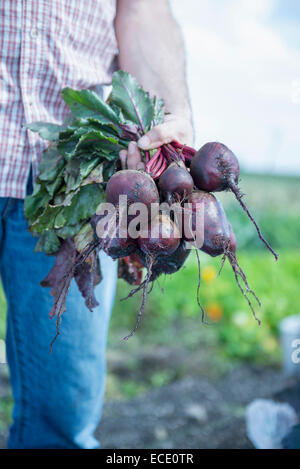 Close-up man hand beetroot holding jeans - Stock Photo