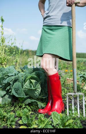 Woman garden allotment cabbage plants - Stock Photo