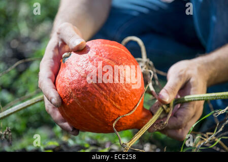 Pumpkin squash gourd man holding garden - Stock Photo