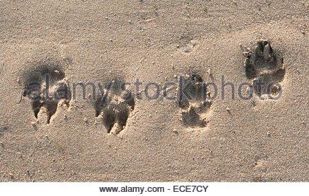 D Ijmuiden / Zandvoort. Tracks in the sand - Stock Photo