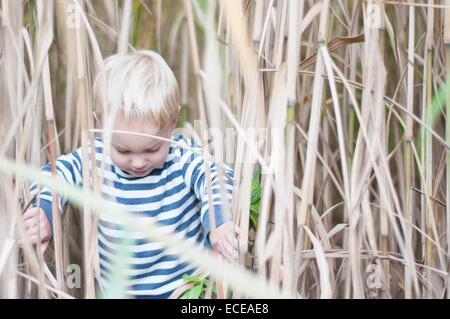 Boy in wheat field - Stock Photo