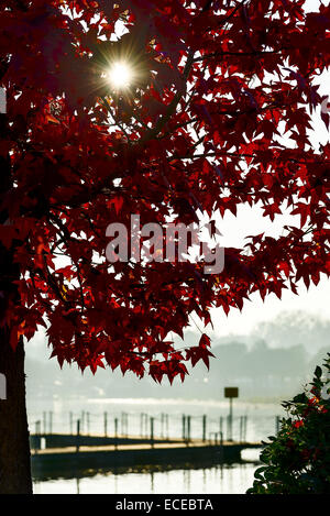 Italy, Sun shining through red foliage of maple tree with lake pier in blurred background - Stock Photo