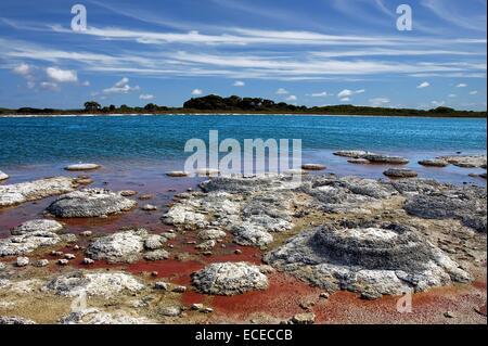 Australia, Western Australia, Shark Bay, Marine Nature Reserve, Stromatolites in Hamelin Pool - Stock Photo