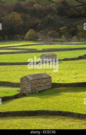 Gunnerside Bottoms, Swaledale, Yorkshire Dales National Park - Stock Photo