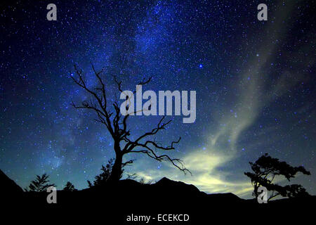 Night in sibillini mountains , in foreground old tree , in background the milky way. - Stock Photo