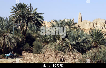 The Temple of the Oracle (also known as the Temple of Amun) rises over the palm trees in the village of Aghurmi - Stock Photo