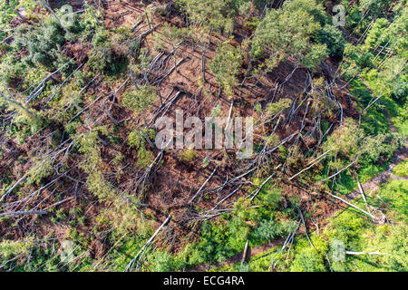 Storm damage in Schellenberger forest, above the Baldeneysee, caused by a heavy storm Ela, over the Rhine-Ruhr area, - Stock Photo