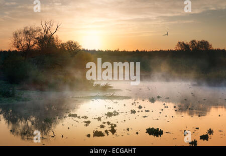 Fog and bird over autumn river at sunrise - Stock Photo