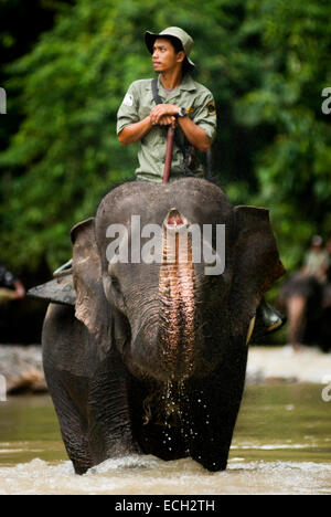 Portrait of a ranger riding an elephant during forest patrol in Gunung Leuser National Park, Indonesia. © Reynold - Stock Photo