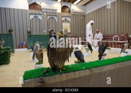 Tethered hooded falcons for sale in the Falcon Souq near Waqif market located in the district of Al Souq which is - Stock Photo