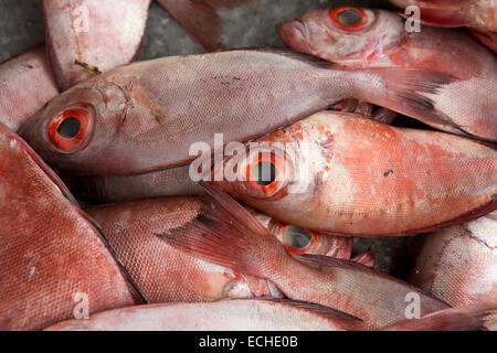 Mauritius, Mahebourg, freshly caught reef fish red snappers on roadside stall - Stock Photo
