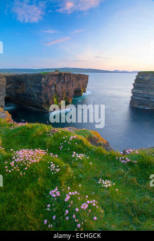 Thrift growing on the clifftop at Downpatrick Head, County Mayo, Ireland. - Stock Photo