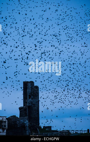 Aberystwyth Wales UK, Monday 15 December 2014  A murmuration of starlings flying over the ruined tower of  Aberystwyth - Stock Photo
