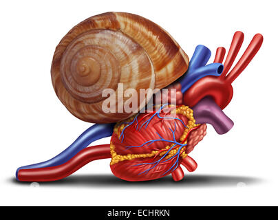 Slow heart rate concept as a snail shell on human anatomy from an unhealthy body as a medical health care symbol - Stock Photo