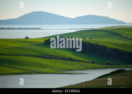 Cattle in green fields on the shore of Clew Bay, County Mayo, Ireland. - Stock Photo