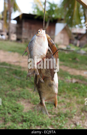 Fish hanging in front of traditional wooden huts with palm roofs at the maroon village of Goejaba, Boven-Suriname, - Stock Photo