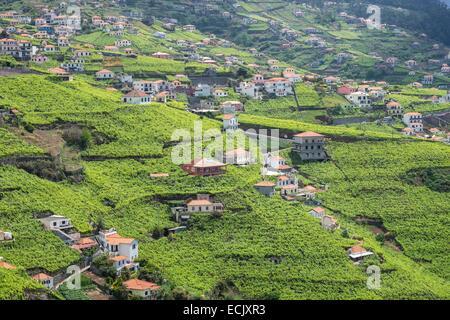 Portugal, Madeira island, hiking along the levada do Norte, vineyard around Estreito de Camara de Lobos - Stock Photo