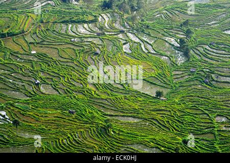 China, Yunnan Province, Yuanyang rice terraces - Stock Photo
